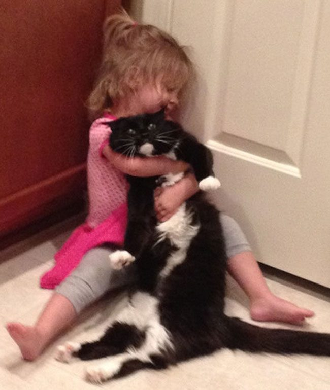 Having A Cat Might Actually Impact Your Mental Health Youre ALL - 31 photos that prove cats are actually assholes