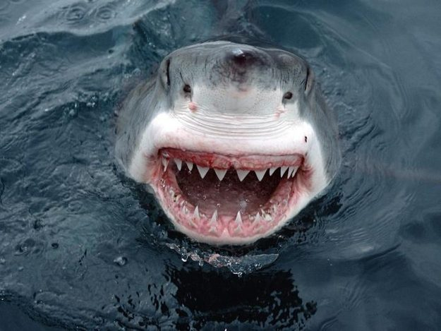 This Initially Terrifying But Very Friendly Shark