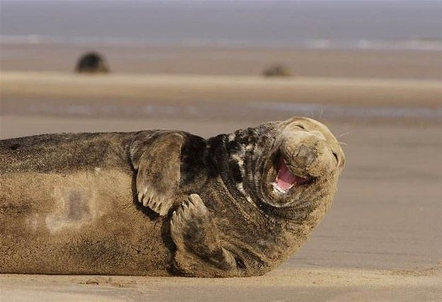 This Sea Lion