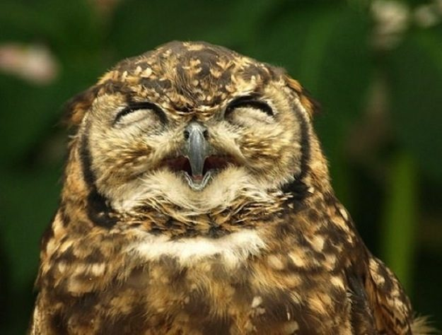 This Owl