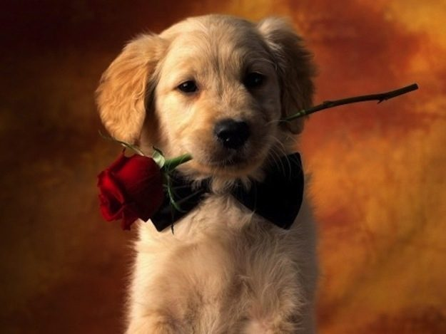 This Puppy With A Rose