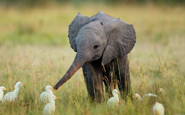 This Baby Elephant And These Birds