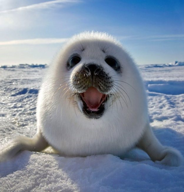 This Seal