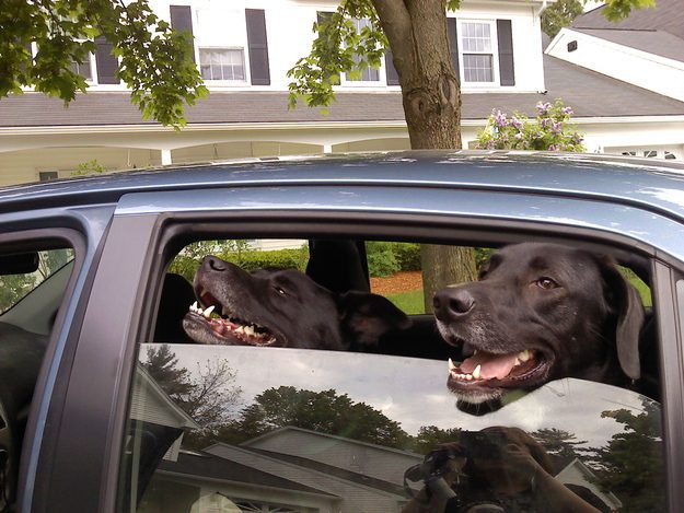 These Dogs In This Car
