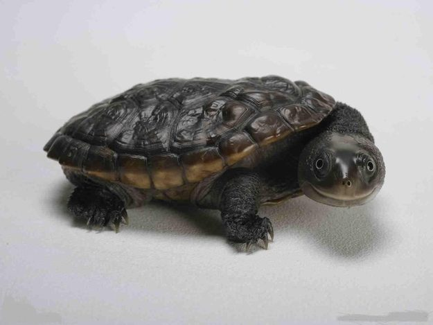 This Turtle