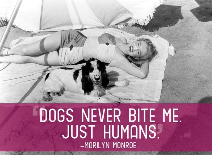 Marilyn Monroe Dog Bite Quote