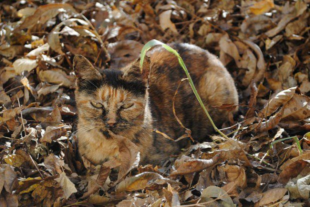 The art of camouflage: this fierce feline NAILS it!