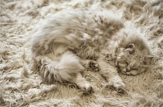 Snug as a cat on a rug!