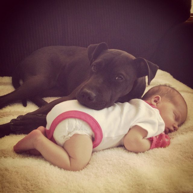 puppies and babies sleeping together relationship
