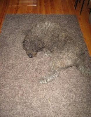 Not sure where the dog ends and the carpet starts...