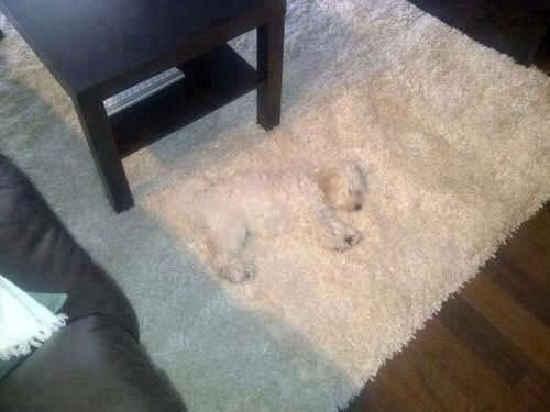 You could hide a whole litter on this carpet.